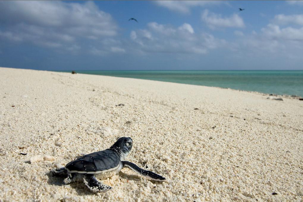 Refuge National de Vie sauvage Ostional costa rica voyage agence de voyage