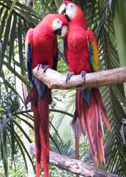 Parc National Carara aras rouge costa rica voyage agence de voyage