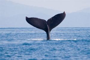 isla del cano baleine