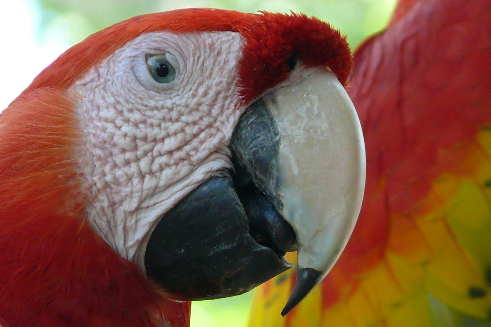 écotourisme aras rouge costa rica voyage agence francophone sur mesure