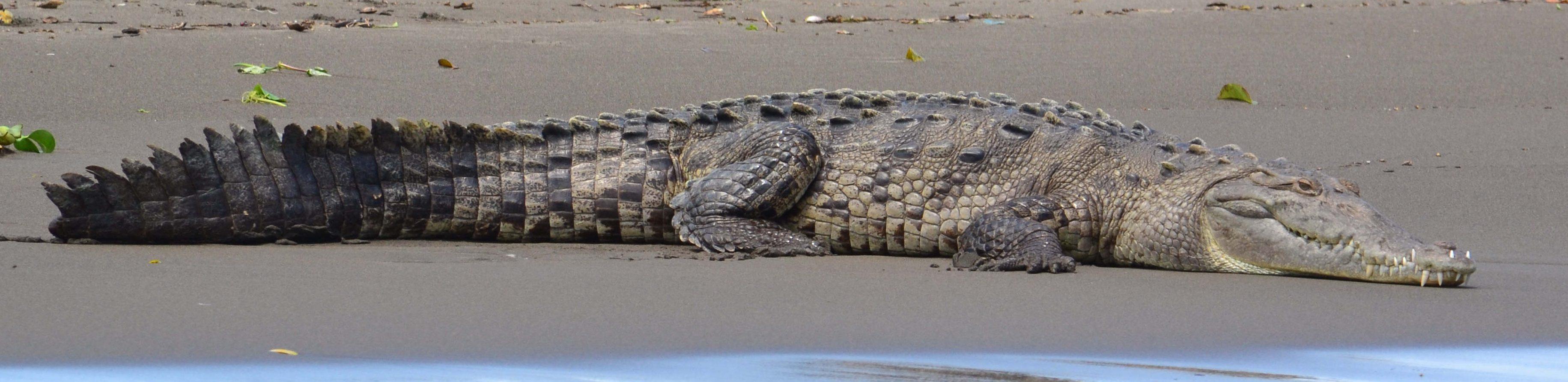 crocodile parc national de palo verde costa rica voyage agence de voyage