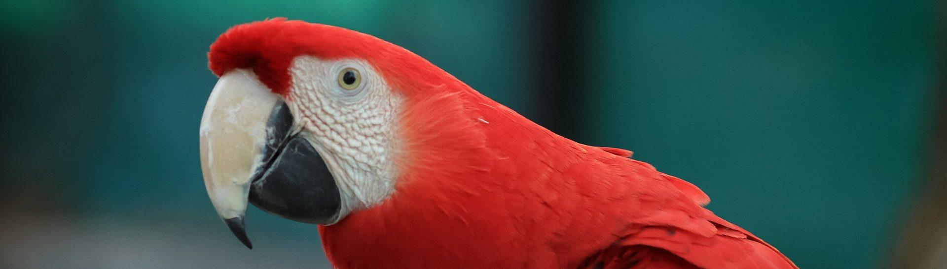 perroquet parc national de palo verde costa rica voyage agence de voyage