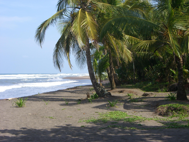 tortuguero_plage_costa_rica