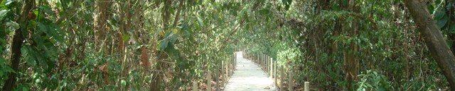 Parc National Carara costa rica voyage agence de voyage