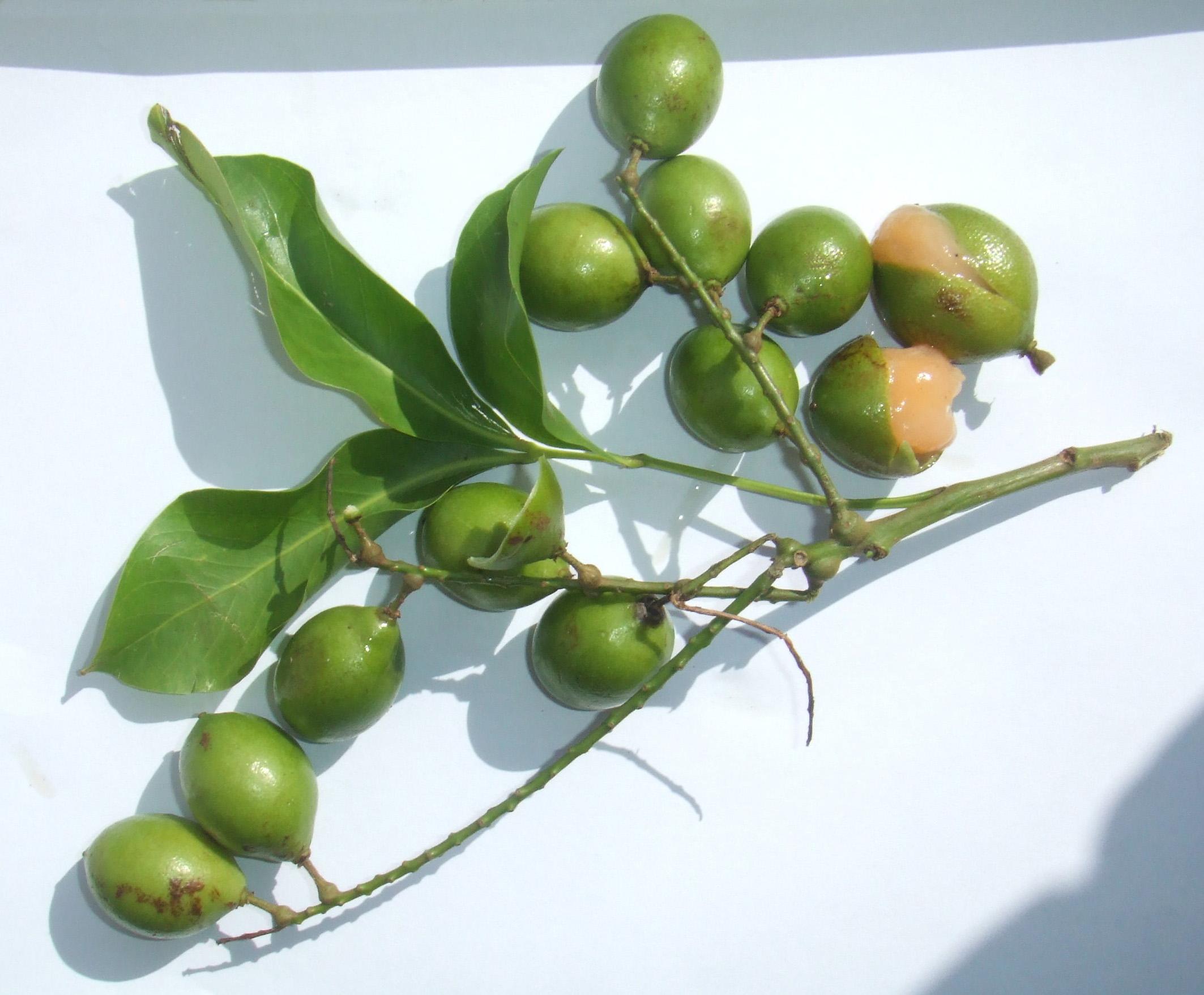 fruits du Costa Rica costa rica voyage agence de voyage