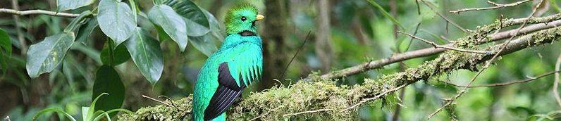 San Gerardo de Dota costa rica voyage agence de voyage quetzal