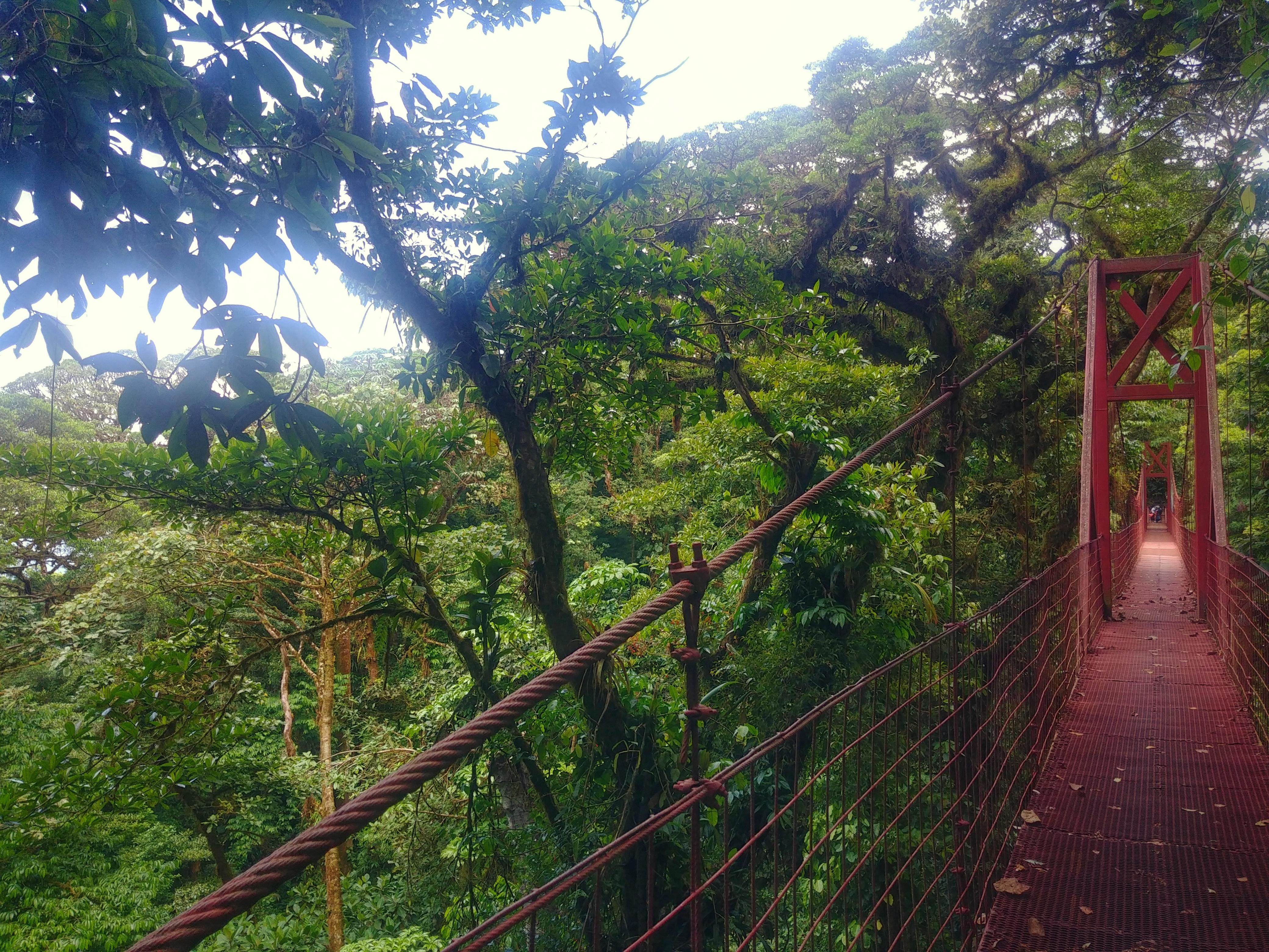 forêts de nuages forêt de nuage costa rica voyage pont suspendu monteverde