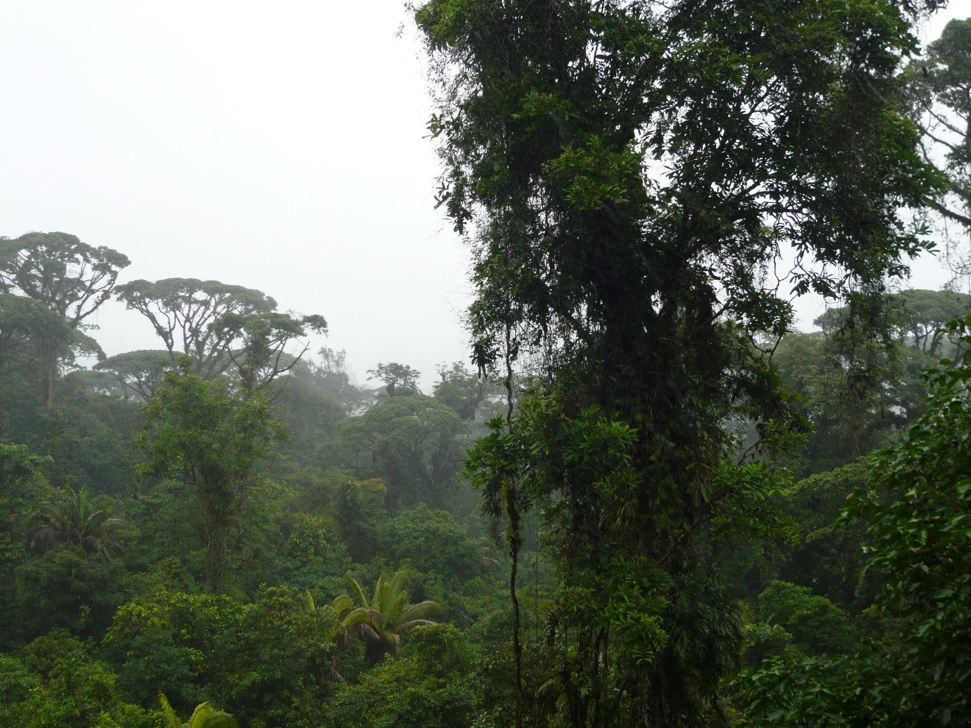 forêts de nuages forêt de nuage costa rica voyage braulio carrillo