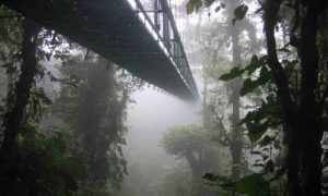 forêts de nuages forêt de nuage monteverde pont suspendu costa rica voyage