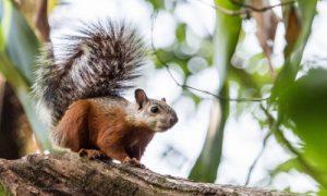 écotourisme au Costa Rica voyage agence francophone sur mesure