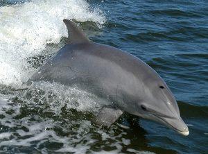 Baleines au Costa Rica, dauphins, costa rica voyage, agence francophone, sur mesure