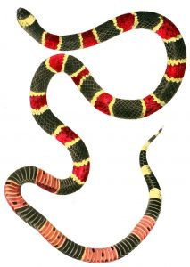 serpent, serpent corail, costa rica voyage, agence francophone, sur mesure