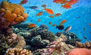 récifs coraliens du Costa Rica, costa Rica Voyage, voyage au Costa Rica, séjour au Costa Rica, Voyage sur mesure
