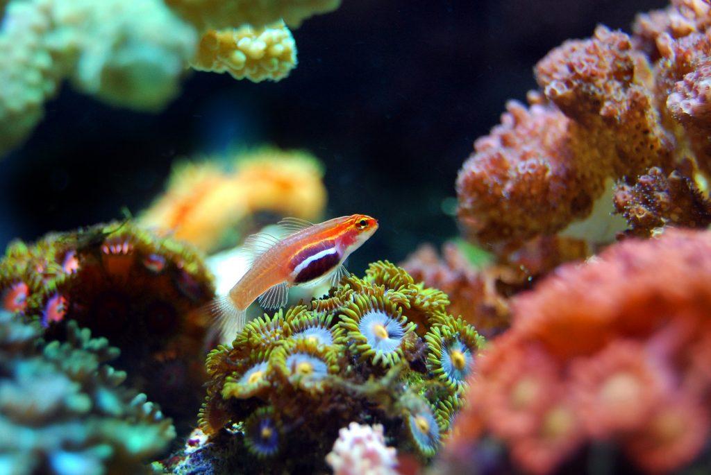 biodiversité, réciif corallien , Costa Rica Voyage, Voyage sur mesure