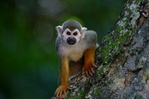 certification tourisme durable costa rica