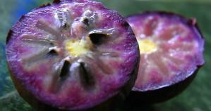 fruits incontournables au Costa Rica, caimito, costa rica voyage, agence francophone, sur mesure