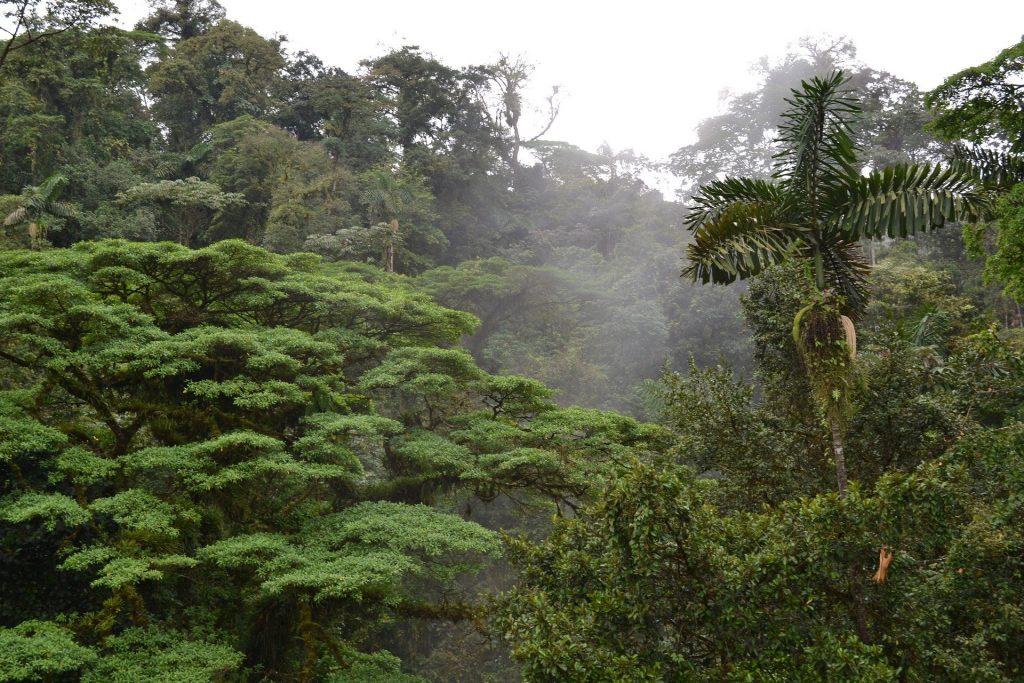 forêts, jungle, costa rica voyage, agence de voyage francophone, sur mesure