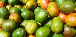 fruits incontournables au Costa Rica, jocote, costa rica voyage, agence francophone, sur mesure