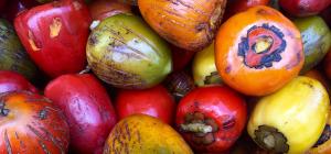 fruits incontournables au Costa Rica, pejibaye, costa rica voyage, agence francophone, sur mesure