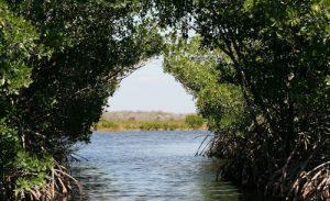 mangroves au Costa Rica, mangrove, costa rica voyage, agence francophone, sur mesure