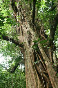 bienfaits des forêts, arbre tropical, costa rica voyage, agence francophone, sur mesure