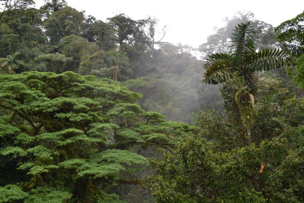 bienfaits des forêts, forêt tropicale, costa rica voyage, agence francophone, sur mesure