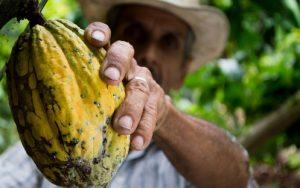 cacao au Costa Rica, fève de cacao, costa rica voyage, agence francophone, sur mesure