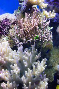 transplantation corallienne, corail, costa rica voyage, agence francophone, sur mesure