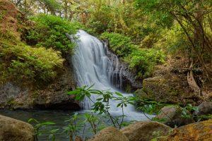 bienfaits des forêts, cascade, costa rica voyage, agence francophone, sur mesure