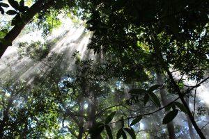 ponts suspendus au Costa Rica, forêts, costa rica voyage, agence francophone, sur mesure