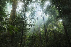 neutralité carbone, forêt, Costa Rica Voyage, agence francophone, sur-mesure