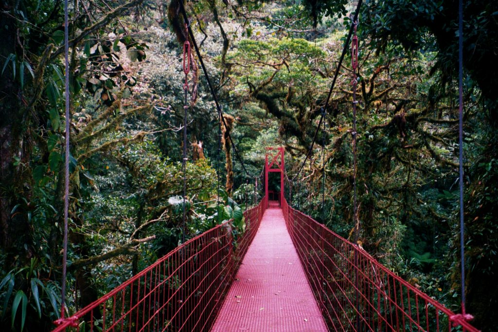 ponts suspendus au Costa Rica, jungle, costa rica voyage, agence francophone, sur mesure