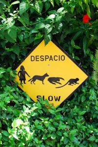animaux sauvages, sécurité, costa rica voyage, agence francophone, sur mesure